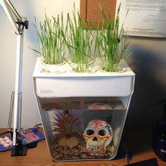 Office Trials - Aquaponic System - DIY - MOTHER EARTH NEWS