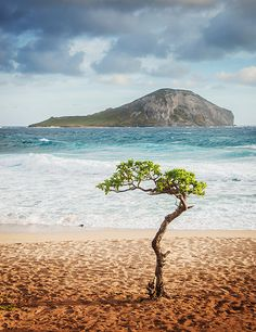 Waimanalo, Hawaii I'd setup camp right under the tree and just keep moving around it to keep in the shade!!  :-)
