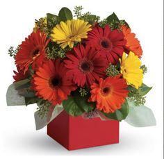 Boronia Exclusive Florists