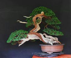 bonsai swirlIdeas  : More Pins Like This At FOSTERGINGER @ Pinterest