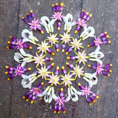 This woman's work is stunning. All mandalas made from plants! http://www.danmala.com