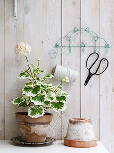 Anna Truelsen inredningsstylist - potted plants