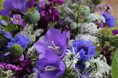 blooms flowers - Google Search
