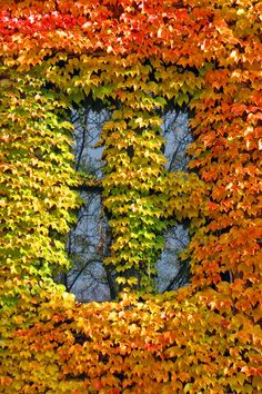 A window on autumn at Marquette University.
