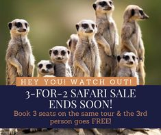 Book 3 seats on the same tour & the person goes FREE! 3 For 2, 30 August, Africa Travel, Budget Travel, Safari, African, Tours, Holidays, Free