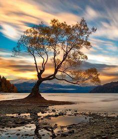 Lone tree...