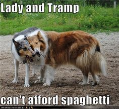 funny-dog-pictures-lady-and-tramp
