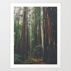 Collect your choice of gallery quality Giclée, or fine art prints custom trimmed by hand in a variety of sizes with a white border for framing. Fine Art Prints, Tapestry, Gallery, Wall, Hanging Tapestry, Roof Rack, Walls, Tapestries, Wall Rugs