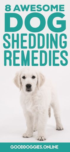 Check out these 8 dog shedding remedies that will help you fight back against #dog hair. #GoodDoggies