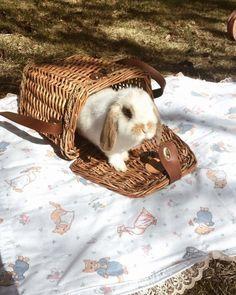Bunny Hutch, Laundry Basket, Wicker, Rabbit, Cottage, Decor, Alberto Vargas, Bunny, Rabbits