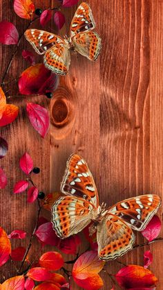 Butterflies on wood - iPhone wallpapers @mobile9