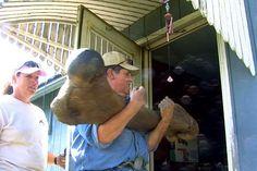 Giant mammoth bone found in Iowa