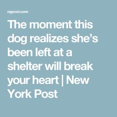 The moment this dog realizes she's been left at a shelter will break your heart   New York Post