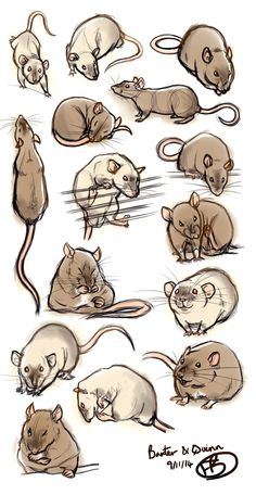 Fantastic rattie sketches
