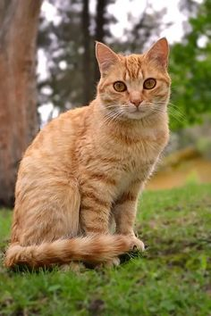 10 of the Best Ways To Eliminate Litter Box Odors That May Surprise You! Cute Cats And Kittens, Baby Cats, Kittens Cutest, Ragdoll Kittens, Bengal Cats, Cool Cats, Pretty Cats, Beautiful Cats, Orange Tabby Cats