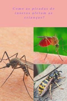 mordida de aranha armadeira sintomas de diabetes