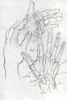 nizhoni draws anatomy