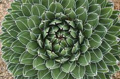 Debra Lee Baldwin's <em>Designing with Succulents</em>