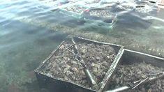 oesters yerseke suusentijs Gepubliceerd op 24 nov. 2010 oesters yerseke HD 1080 How To Dry Basil, Tube, Films, Herbs, Movies, Cinema, Film Books, Movie Quotes, Movie