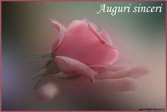 biglietti auguri con rosa rosa in mano