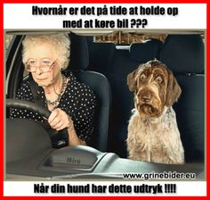 Kig forbi til en go griner på Danmarks sjoveste side Animals And Pets, Funny Animals, Funny Quotes Wallpaper, Funny Jokes, Hilarious, Badass Quotes, Funny Thoughts, Just For Laughs, Funny Moments