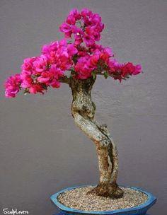 Bonsai Flower Sculpture