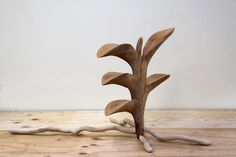 Vanda falcata 富貴蘭 wood carving(Camphor tree)