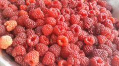 Everywhere raspberries