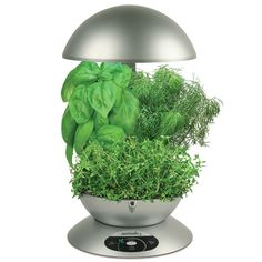 Aero Garden is a hydroponic planter that allows you to grow vegetables and herbs indoors year round!