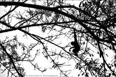 South African-born fine art photographer, Adam Rabinowitz, featuring his collection of fine art prints on Rabinowitz Photography. My Photos, Silhouette, The Originals, Photography, Photograph, Fotografie, Photoshoot, Fotografia