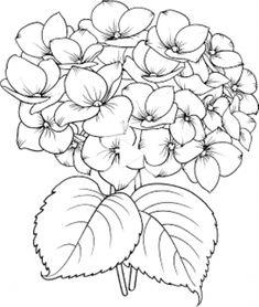 Flower Line Drawings, Flower Sketches, Art Drawings Sketches, Watercolor Flowers, Watercolor Paintings, Hydrangea Painting, Hydrangea Flower, Hydrangeas, Blooming Flowers