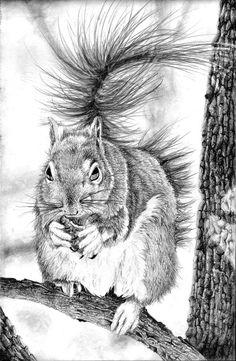 ... , shading, pencil , charcoal, ink, figurative, portraits, wildlife