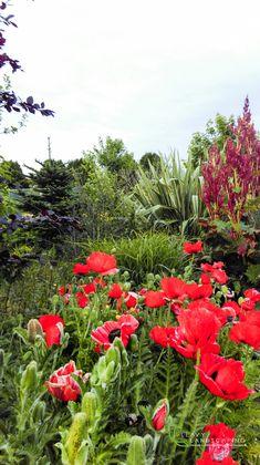 Poppy In Garden. Landscape Design, Garden Design, Ireland Landscape, Garden Landscaping, Poppy, Plants, Front Yard Landscaping, Landscape Designs, Plant