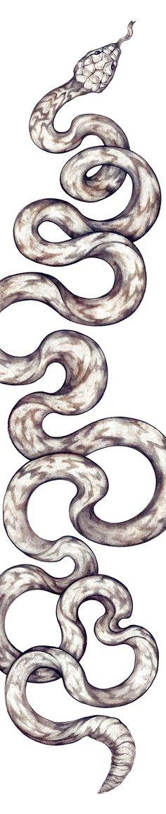 FORD Go Further Snake - ZSO, Arte & Ilustración, NYC