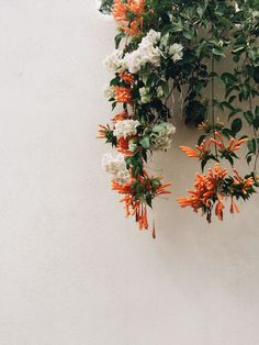 Adorable Examples How To Arrange Hanging Flowers For Your Yard - DIY Summer Floral Arrangements Hanging Flowers, Wild Flowers, Beautiful Flowers, Bouquet Flowers, Unique Flowers, Exotic Flowers, Wedding Flowers, Plants Are Friends, Flower Aesthetic