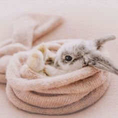 Shared by ré❈. Find images and videos about bunny, easter and animal on We Heart It - the app to get lost in what you love.