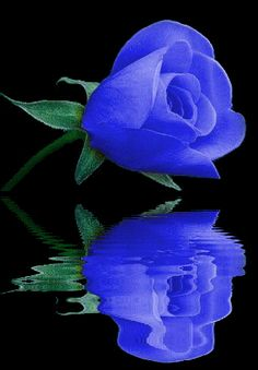 Η ΔΙΑΔΡΟΜΗ ®: Life of flowers
