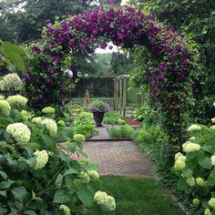 """Ina Garten, This is a view down the path through the Annabelle hydrangeas (which unlike most hydrangeas don't wilt in the sun!) and the arch covered with climbing purple Clematis """"Jackmanii. Garden Structures, Garden Paths, Clematis Viticella, Annabelle Hydrangea, The Secret Garden, Purple Clematis, Garden Arches, Garden Cottage, Secret Gardens"""