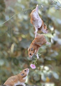 now thats called team work i  have more respect for hamsters now