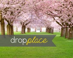 3x4 Durable Matte Vinyl Backdrop / Floor / Pink Flowering Tree Canopy Spring Nature Scene Cherry Blossoms by DropPlace, $25.00