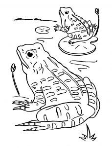 Frogs Free Printable Coloring Pages For Kids In 2020 Frog Coloring Pages Animal Coloring Pages Coloring Pages For Kids
