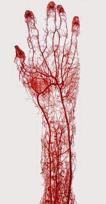 Science With A Twist: Plastination - Arteries in the Human Hand
