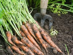 Learn to grow the veggie that inspired this month's color: the carrot!  (http://www.hgtvgardens.com/photos/vegetables-photos/carrot-varieties-to-try-in-your-containers?soc=Pinterest)