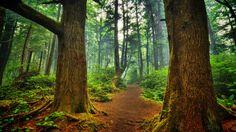 Forest Landscape Wallpaper