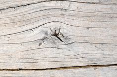Realistic Graphic DOWNLOAD (.ai, .psd) :: http://sourcecodes.pro/pinterest-itmid-1006958839i.html ... Wood Pattern Trunk Texture ...  architecture, concumed, natural, old, pattern, rare, texture, trunk, vintage, wood  ... Realistic Photo Graphic Print Obejct Business Web Elements Illustration Design Templates ... DOWNLOAD :: http://sourcecodes.pro/pinterest-itmid-1006958839i.html