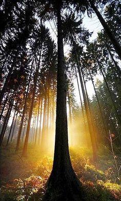 * Sabias que los árboles funcionan como amortiguadores de ruido, retienen las partículas de polvo que flotan en el aire, retienen el agua evitado sequías e inundaciones y protegen al suelo de la erosión.
