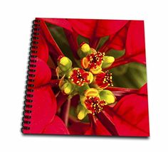 Danita Delimont  Plants  Poinsettia in all its Christmas Glory  Memory Book 12 x 12 inch db_230184_2 * Continue to the product at the image link.