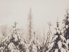 snowing here Snow, Outdoor, Outdoors, Outdoor Games, The Great Outdoors, Eyes, Let It Snow