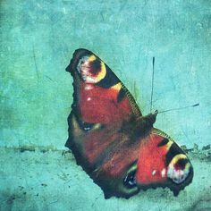 Butterfly on a window by Diesel