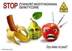 Dlaczego Stop GMO - stop genetycznie modyfikowanej żywności Stuffed Peppers, Christmas Ornaments, Vegetables, Holiday Decor, Food, Home Decor, Diet, Decoration Home, Room Decor